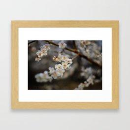 Korean Plum Blossoms Framed Art Print