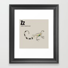 zebra-tailed lizard Framed Art Print