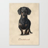 dachshund Canvas Prints featuring Dachshund by Gosia