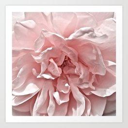 Pink Blush Rose Kunstdrucke