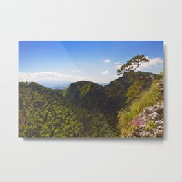 Pine tree at the Dunajec Canyon on the Polish border Metal Print