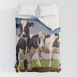 Young Holstein cows Comforters