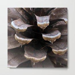 Cone Close Up Metal Print