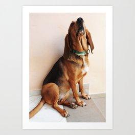 Bruno Jura Dog portrait Art Print