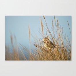 Morning Bird Call Canvas Print