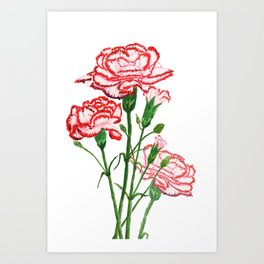 pink and red carnation watercolor painting Art Print