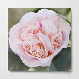 Strawberry Blonde Camellia Flower Metal Print