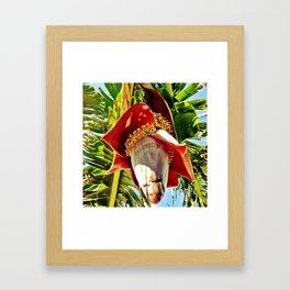 Banana Flower Framed Art Print