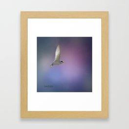 Caspian Tern Framed Art Print