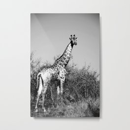 Standing African Giraffe; Black and White Nature Photography from Africa Metal Print