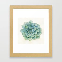 Succulent - Echeveria Framed Art Print