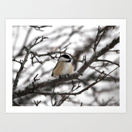 Winter Windblown Black-Capped Chickadee Art Print