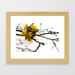 New Zealand Kowhai Flowers Framed Art Print