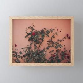 Climbing Roses of Southeast Asia Framed Mini Art Print
