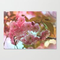 cherry blossoms Canvas Prints featuring Cherry Blossoms by Judy Palkimas