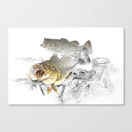 Largemouth Black Bass Fishing Art Canvas Print