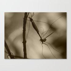 mayflies 2017 (bug porn) Canvas Print