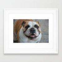 english bulldog Framed Art Prints featuring English bulldog by lyndseylou