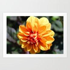 Flower Story Art Print