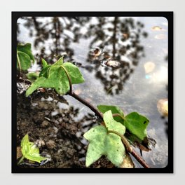 Water, leaves, and the reflection of trees. Canvas Print