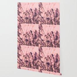 Cherry Blossom Flowers Wallpaper