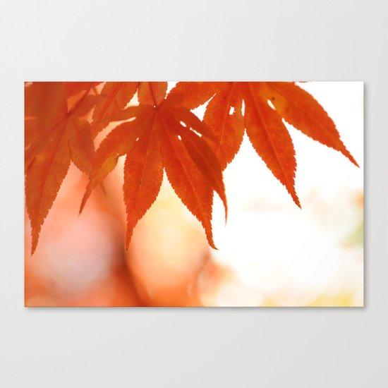 Maple Reds Canvas Print