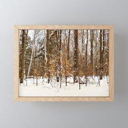 Maple Beech Forest in the Winter Framed Mini Art Print