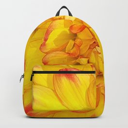 A Yellow Dahlia with Pink tips Close Up Detail Backpack