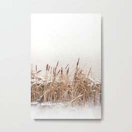 Snow on Typha reeds and frozen water Metal Print