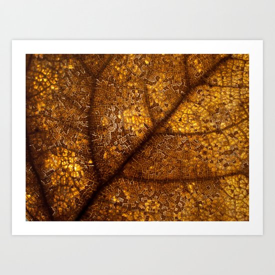illuminated leaf Art Print