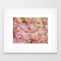 shabby chic Framed Art Prints featuring Shabby chic gladioli by Shalisa Photography