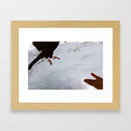 Beak to Hand Framed Art Print