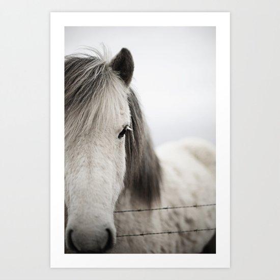 Icelandic White by asleepatw