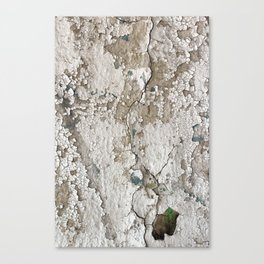 White Decay III Canvas Print