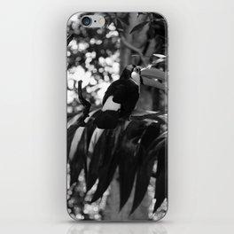 Black and White Tucano bird - Brazil iPhone Skin