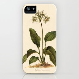 1800s Lithograph Amazon Lily, Eucharis Amazon Grandiflora Flower iPhone Case