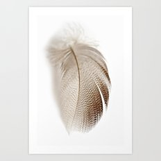 Mallard Feather Art Print