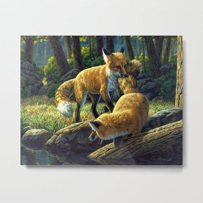 Red Fox Pups Playing Metal Print