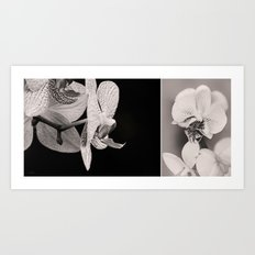 Black and White - Orchid Art Print