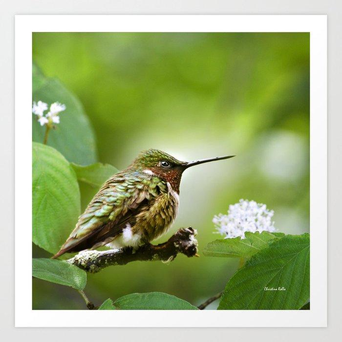 Hummingbird Sitting Art Print