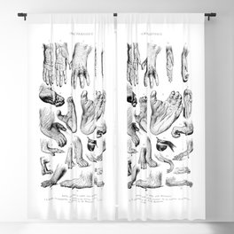 Primate Hands and Feet Blackout Curtain