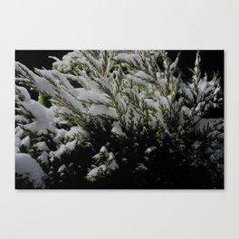 I'm pine, thanks. Canvas Print