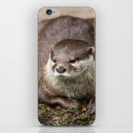 Sunning Otter iPhone Skin