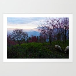 Sheep and Sunsets Art Print