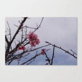 Petite Canvas Print