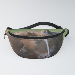 Two Warmblood Horses Playing Together Bay Fanny Pack