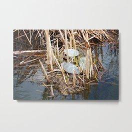 Three Painted Turtles in a Marsh Metal Print