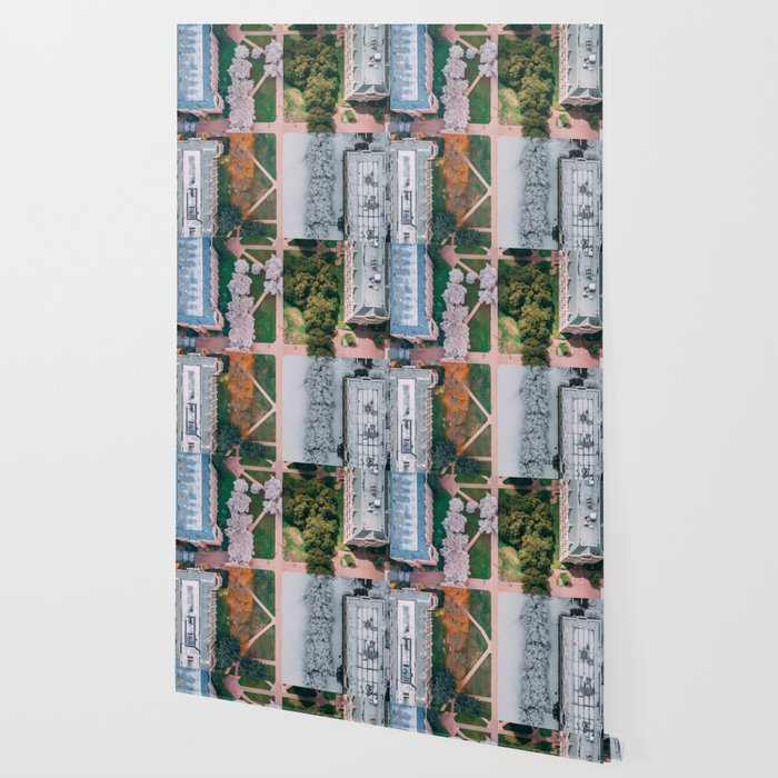 UW Cherry Blossoms: 4 Seasons Wallpaper