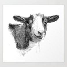 Curious goat sk098 Art Print