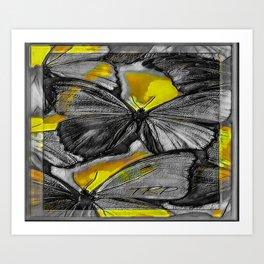 Insect Models: Beautiful Butterflies 07-02 Art Print